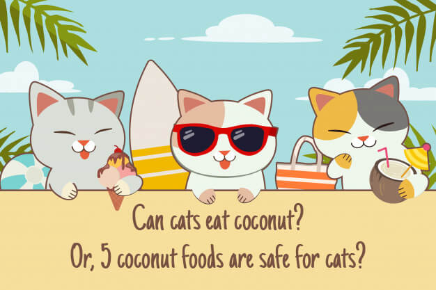 Can Cats Eat Coconut Or 5 Coconut Foods are Safe for Cats?