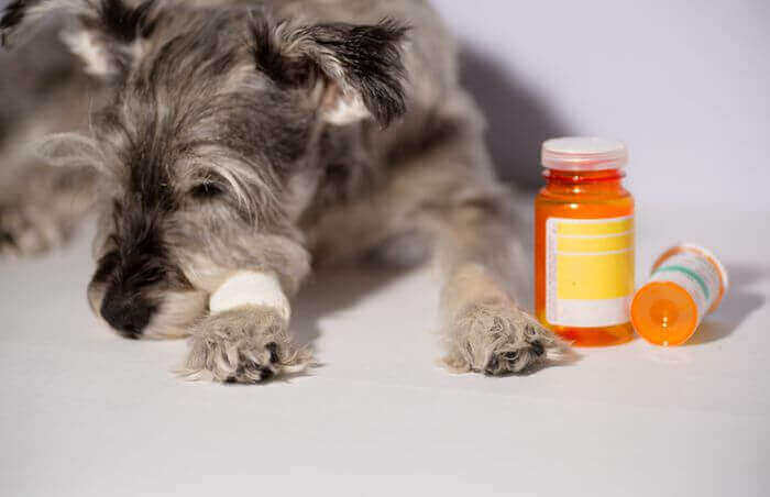 how to euthanize a dog with benadryl pill, how much Benadryl takes to euthanize a dog